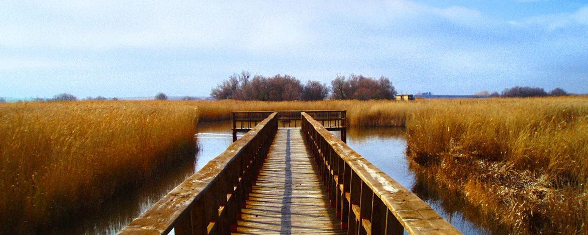 Tablas de Daimiel National Park